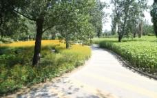 绿化景观图片
