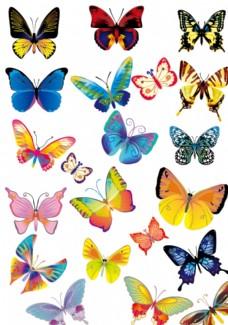 彩色蝴蝶品种图片