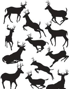 黑白的鹿图片