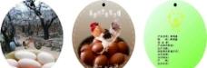 山鸡蛋吊牌图片