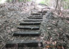 竹林小道图片