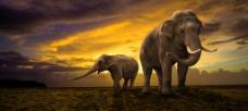 大象与小象图片