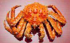 帝王蟹图片