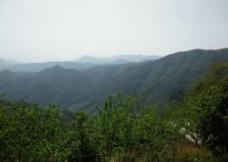 大山绿树图片