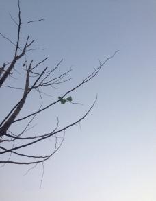 树枝带一片叶子图片
