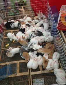 一堆兔子图片