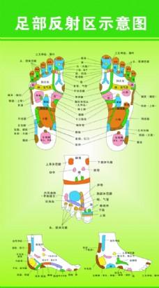 足部反射区示意图