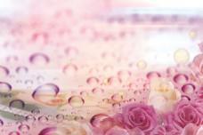 水珠玫瑰花背景分层素材