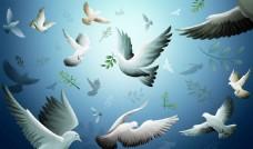 和平鸽桌面壁纸