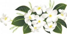 装饰图案 婚礼 角花