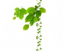 绿叶背景素材