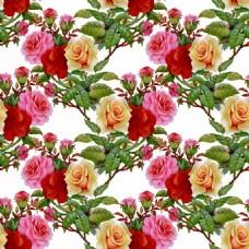 时尚复古玫瑰花植物