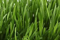 青草上的水珠