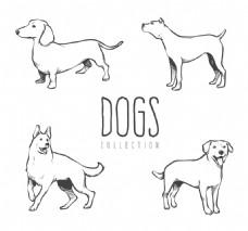 几种不同品种的狗