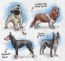 手绘彩色狗品种