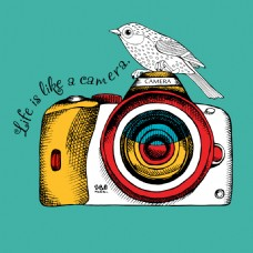 手绘趣味相机和小鸟插画