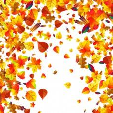 秋季树叶背景图片