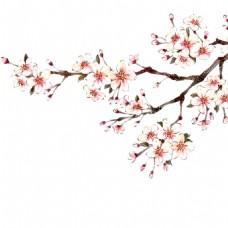 盛开的花png元素