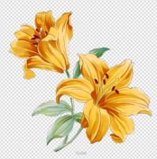 黄百合 移门花纹 花纹图片
