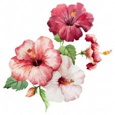 水彩绘艺术花卉插画