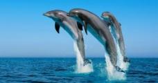 海豚背景图片