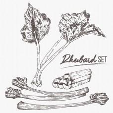 手绘矢量西芹蔬菜