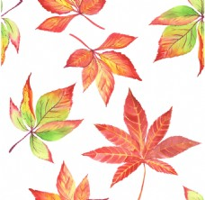 水彩绘唯美枫叶插画