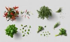 绿色蔬菜实物图