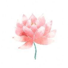 粉色唯美水彩绘花朵插画