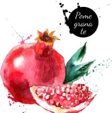 石榴,手绘,水果,矢量图图片
