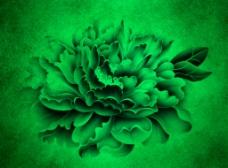 特效牡丹花背景板图片