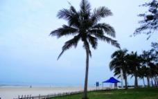 北海银滩椰树林图片