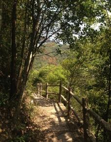 林間小道圖片